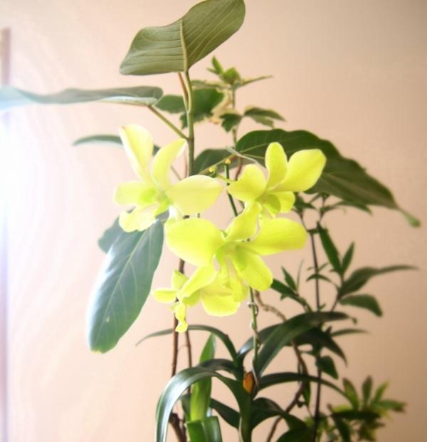 観葉植物に新しい仲間♪お祝い頂きました^^