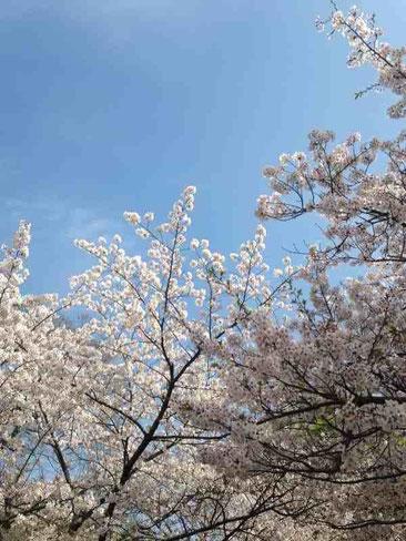 春の一日♪まちの中の小さな森に会いに・・