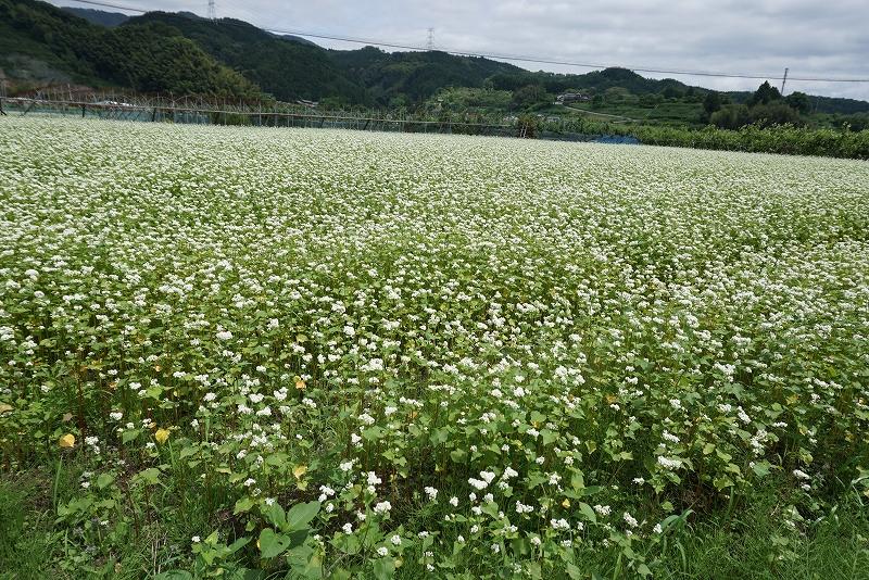 NPO法人九州森林ネットワークプレミアム研修会のご報告①